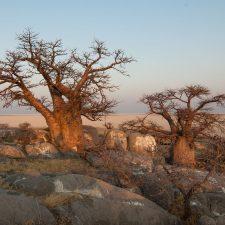 aceite de baobab en cosmética
