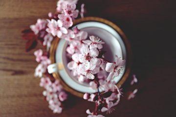 beneficios del árbol de té en la cosmética